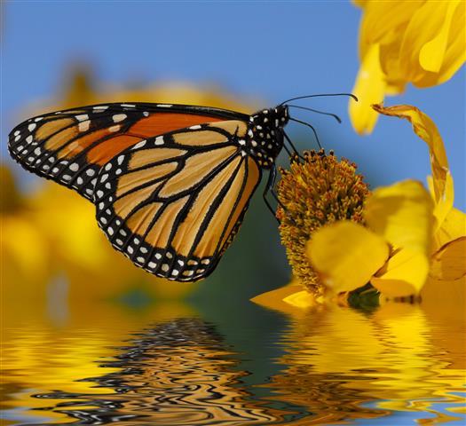 Фотообои бабочка желтый желтый разноцветный