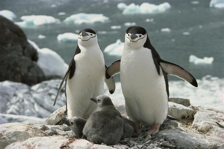 Фотообои животное пара пара фауна