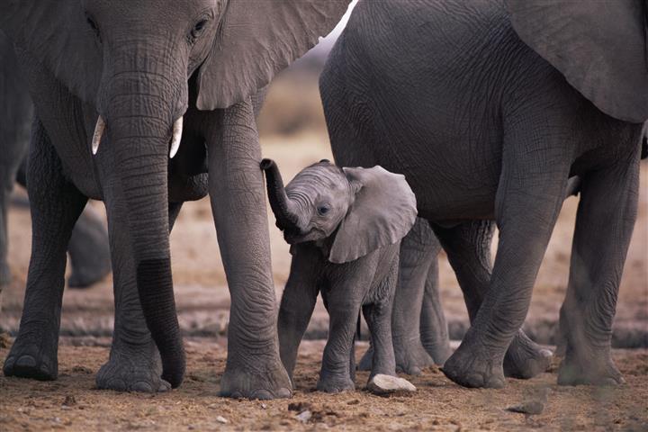 Фотообои слоненок дикий дикий детеныш