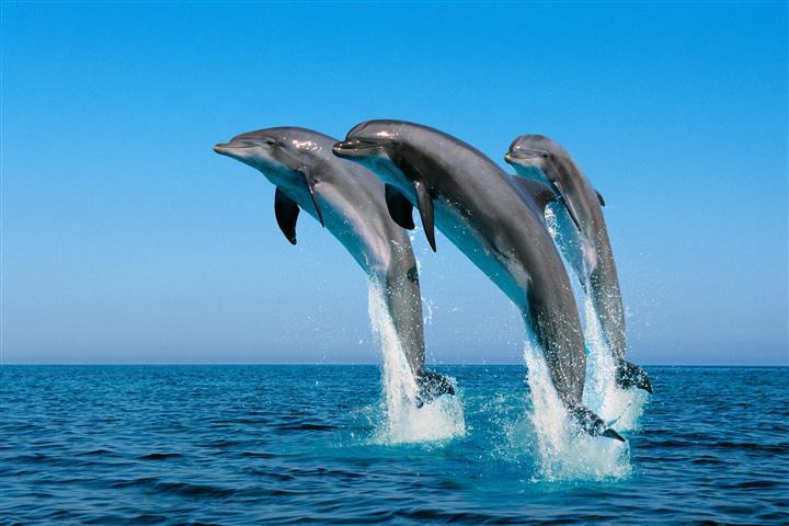 Фотошпалери море пара пара грати