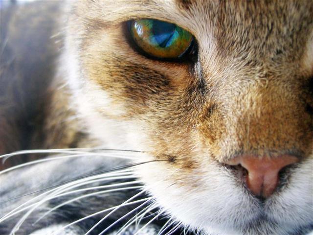 Фотошпалери тварина кішка кішка свійський