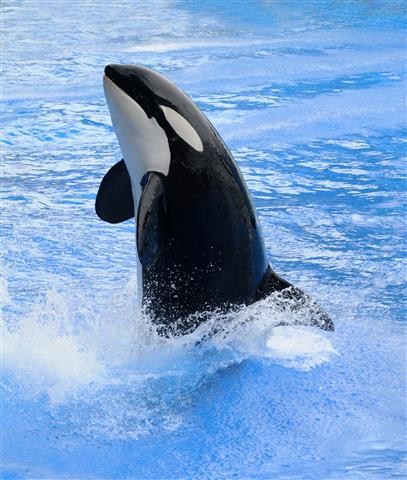 Фотообои море кит кит вода