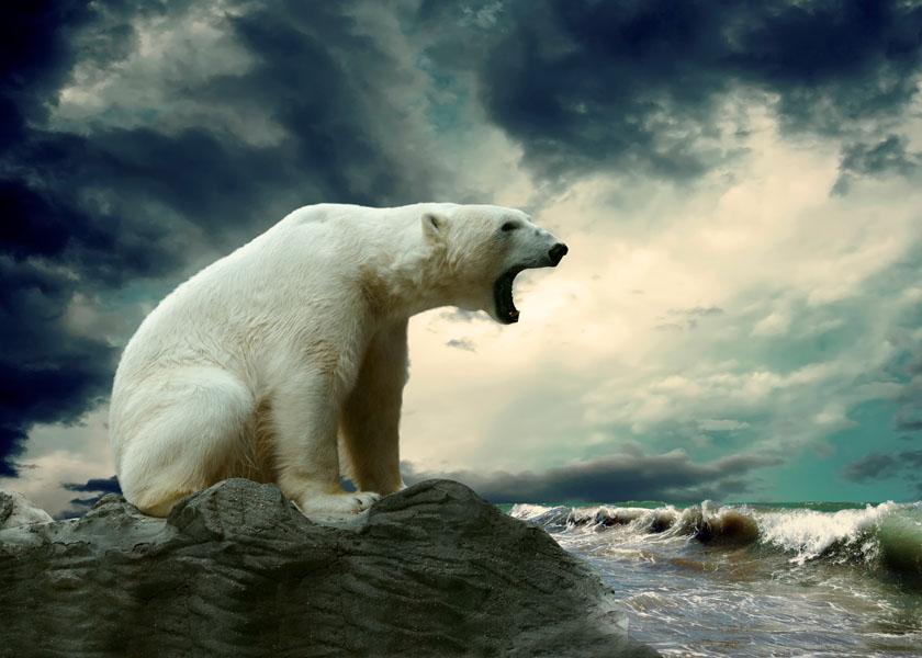 Фотошпалери велмідь тварина дикий білый