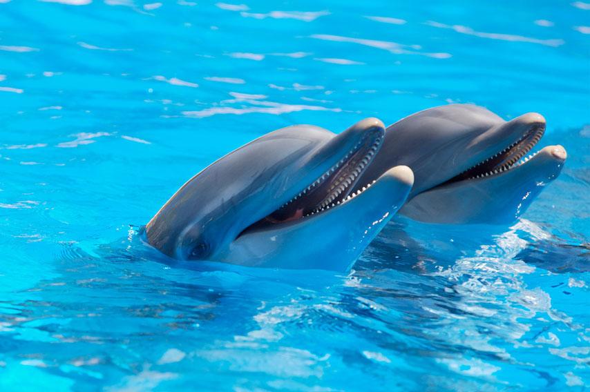 Фотообои дельфин животное рыба вода