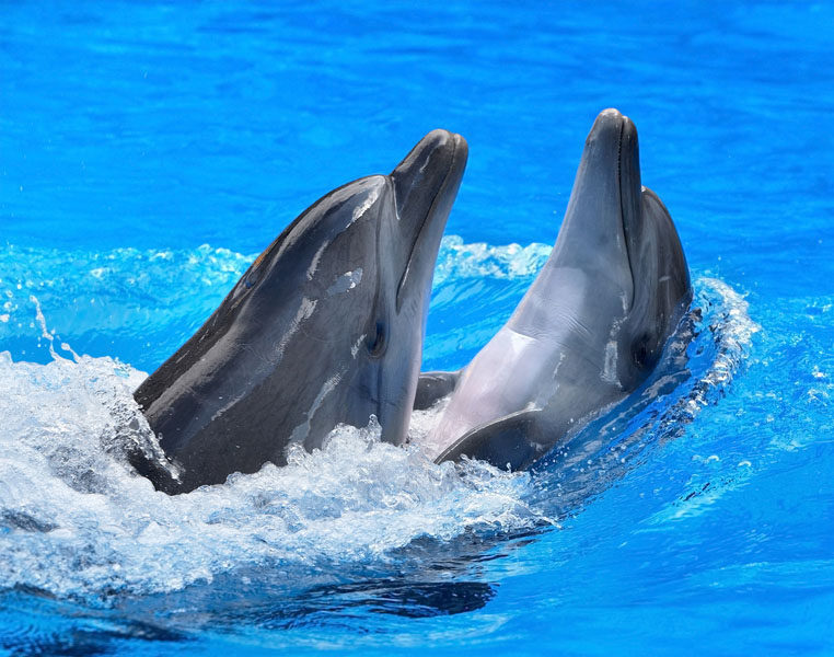 Фотошпалери дельфін тварина риба вода