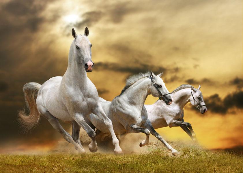 Фотообои лошадь белый конь скакать