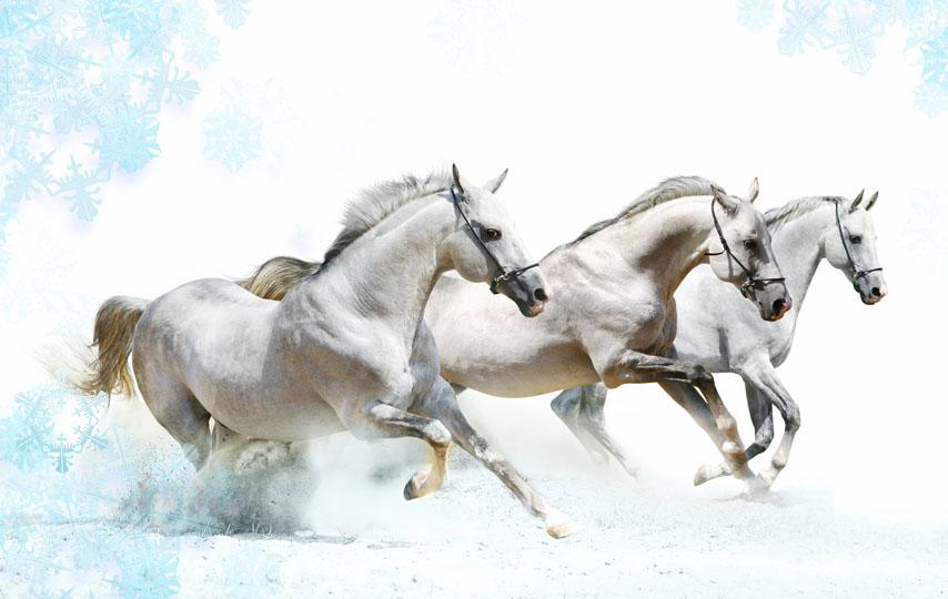 Фотошпалери кінь білый кінь скакати