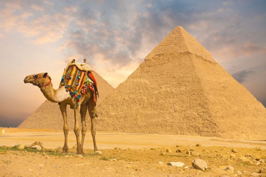 Фотошпалери тварини верблюд піраміда фотошпалери