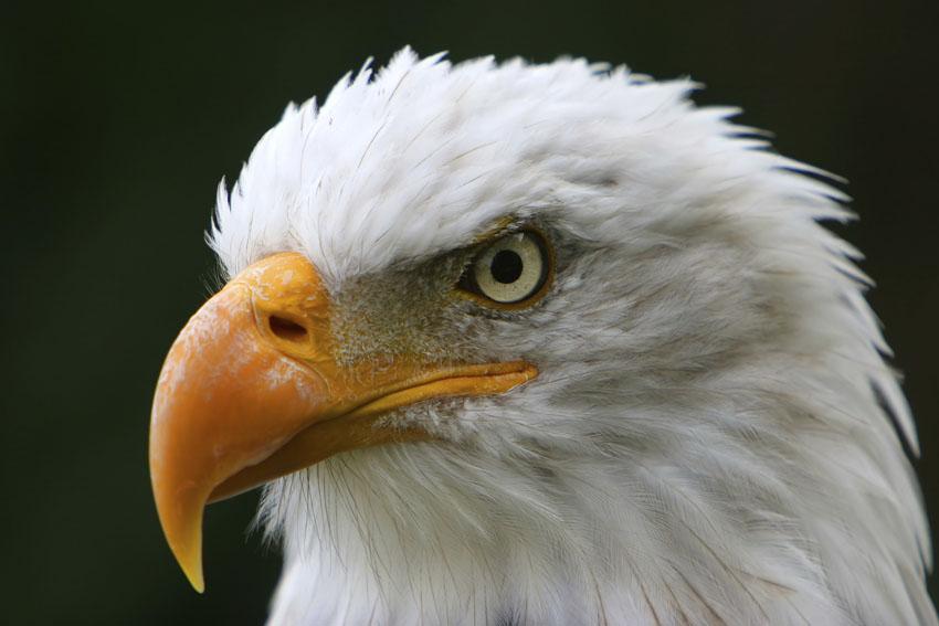 Фотообои животные фауна wallpapers фотообои