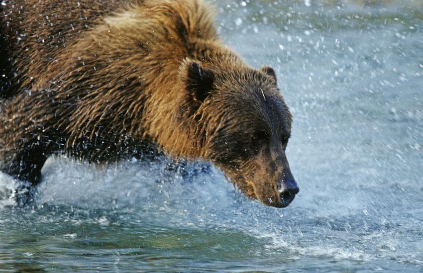 Фотообои животные медведь wallpapers фотообои