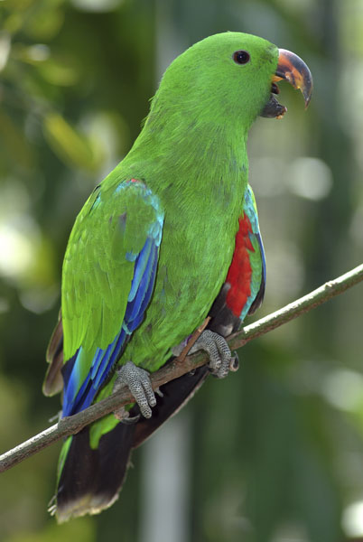 Фотообои животные попугай птица зеленый