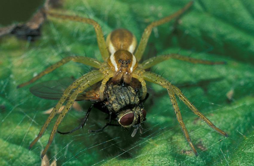 Фотообои животные паук муха макро