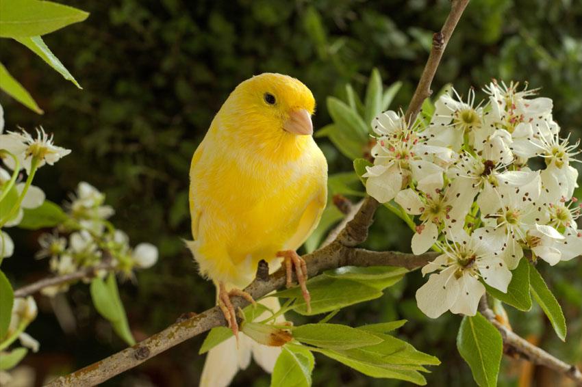 Фотообои животные попугай желтый яблоня