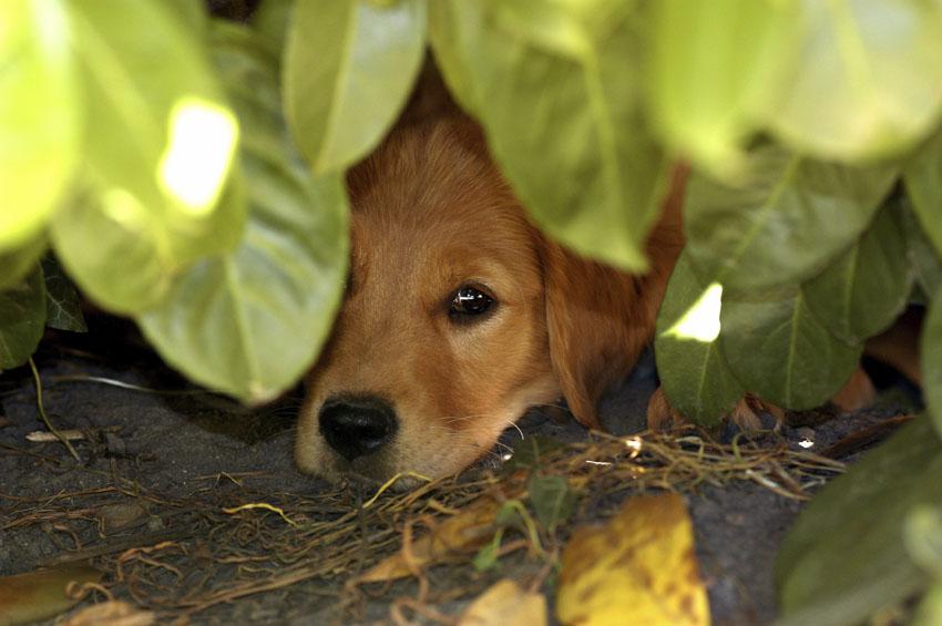 Фотообои животные собака щенок фотообои