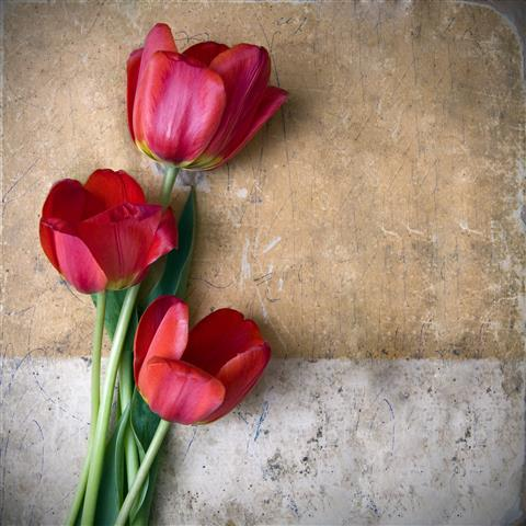 Фотообои искусство тюльпан дизайн арт
