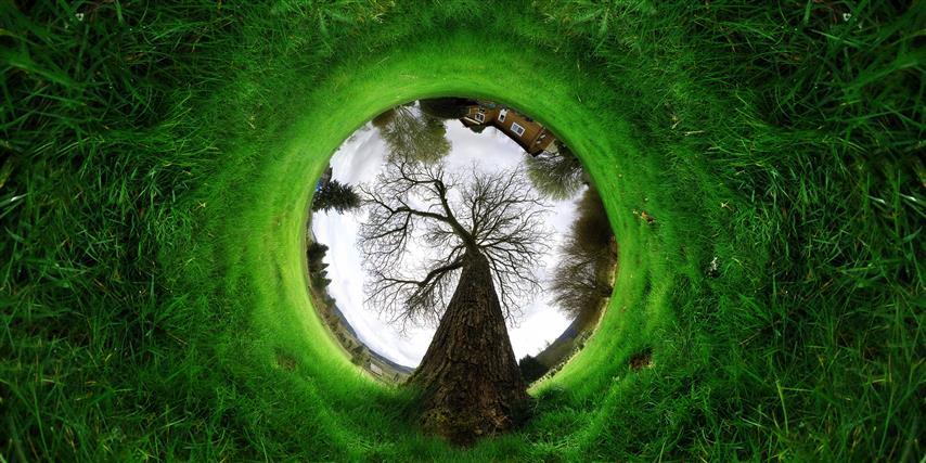 Фотошпалери мистецтво дерево дизайн арт