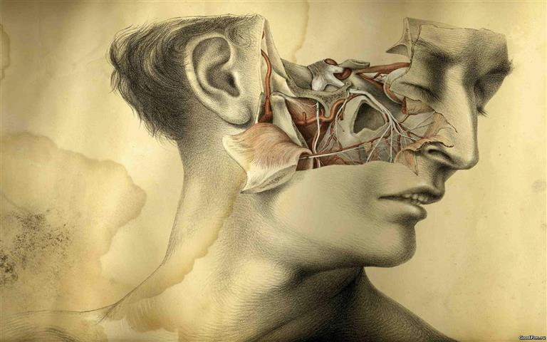 Фотошпалери малюнок голова анатомія обличчя
