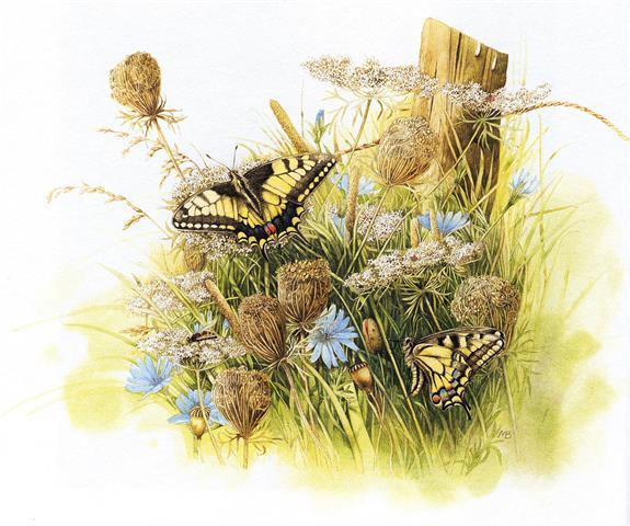 Фотошпалери квіти метелик дизайн арт