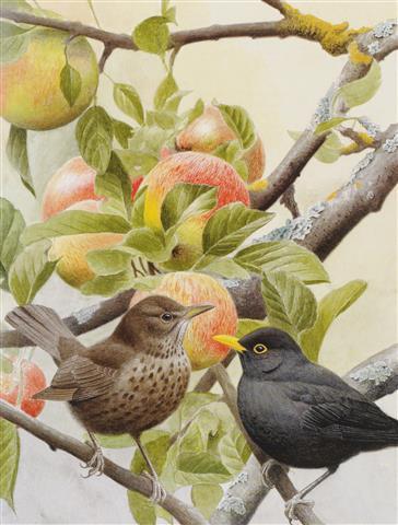 Фотообои искусство дизайн птица арт