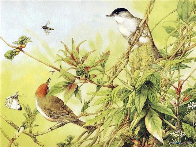 Фотошпалери мистецтво дизайн птах арт