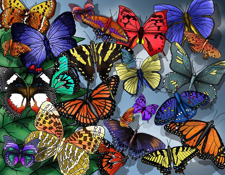 Фотошпалери метелики різнокольоровий яскравий арт