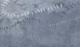 digital mural wallpaper, абстракция, птица, узор, серый