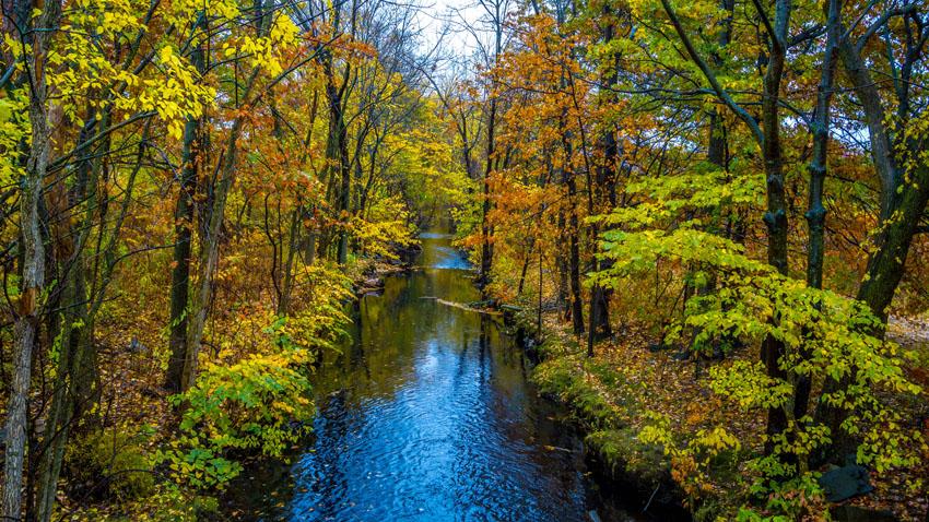 Фотошпалери осінь, листя, жовтий, пейзаж