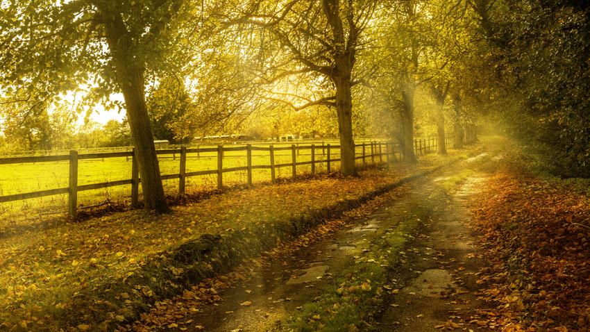 Фотообои осень листья желтый пейзаж
