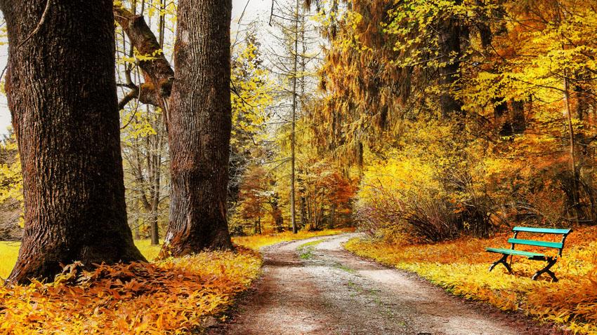 Фотошпалери осінь листя макро природа