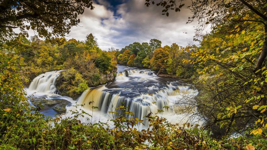 Фотошпалери осінь, листя, багряний, природа