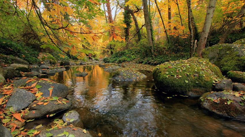 Фотообои осень листья багряный природа