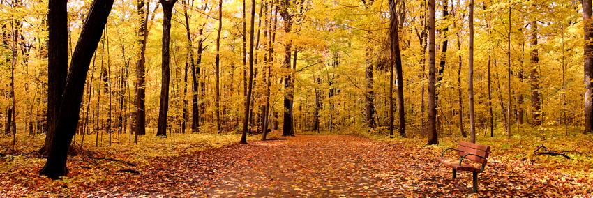 Фотошпалери осінь листя багряний природа