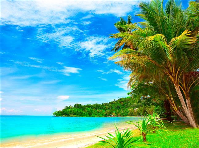 Фотошпалери море, пальма, океан, бухта