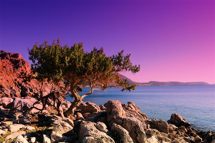 Фотошпалери море, пальма, камені, океан