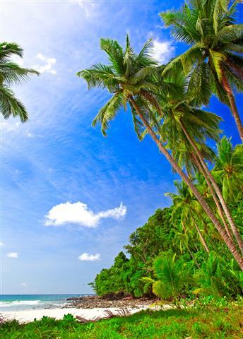 Фотообои море пальма узкий пляж