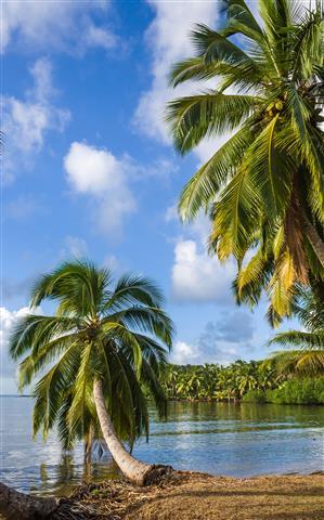 Фотообои море пальма океан узкий