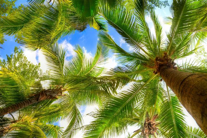 Фотошпалери море пальма відпочинок небо