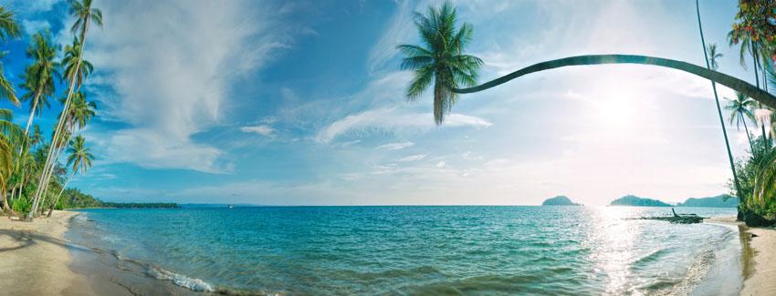 Фотообои море пальма пляж океан