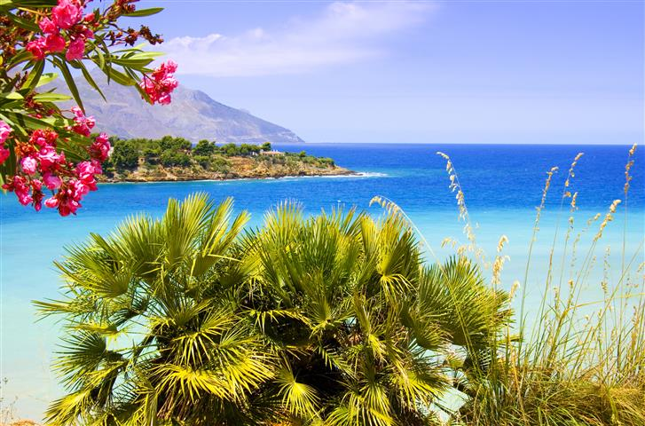 Фотошпалери море, пальма, океан, пляж