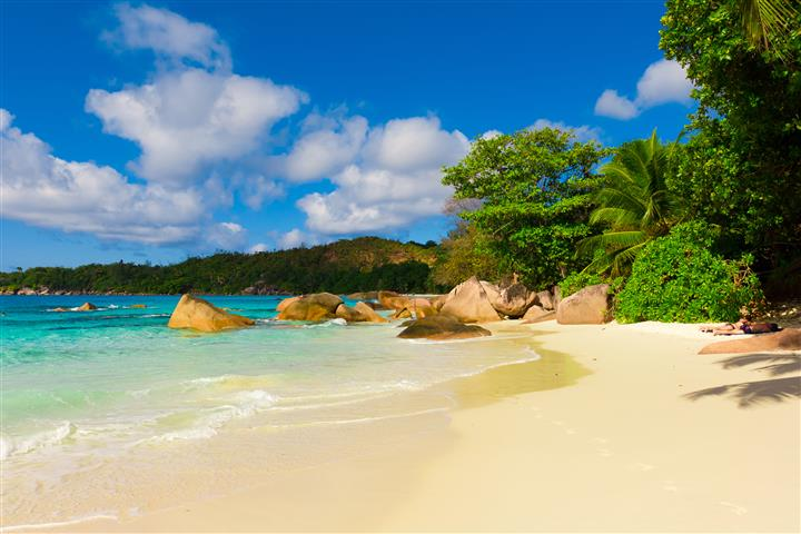 Фотообои океан пальма камни бухта