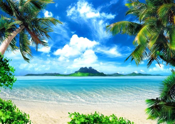 Фотообои море пальма остров пляж