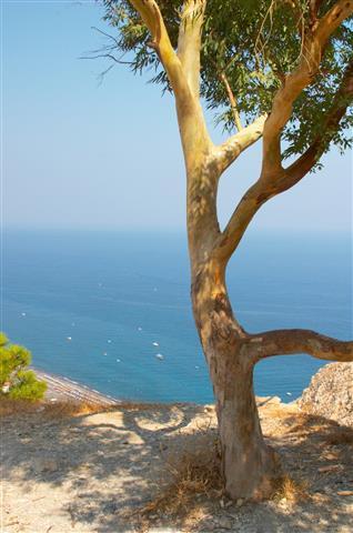 Фотообои море дерево океан узкий
