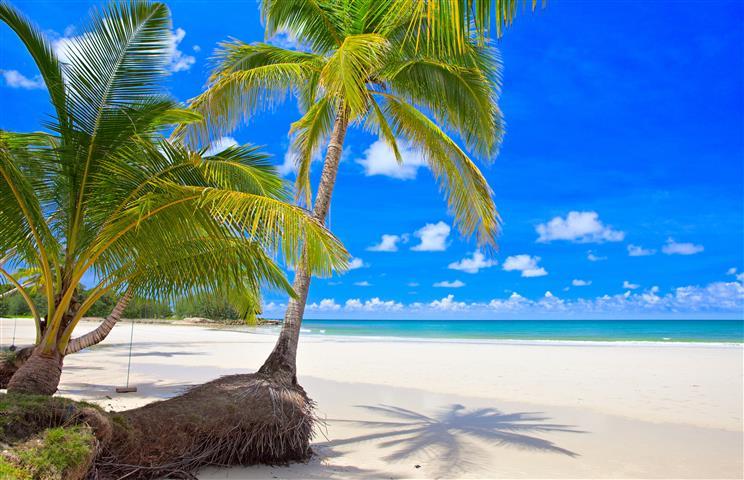 Фотообои море пальма океан пляж