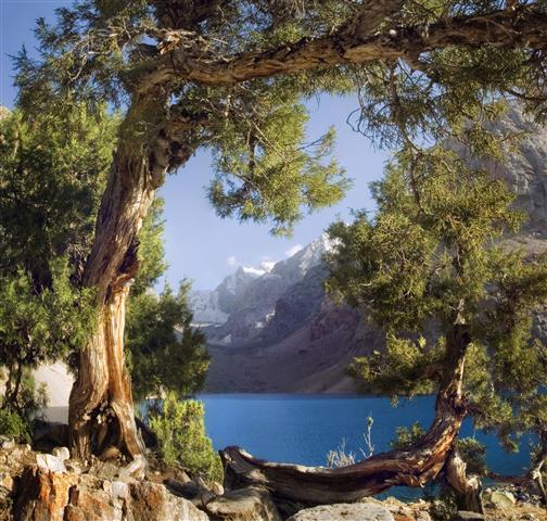 Фотообои море дерево камни берег