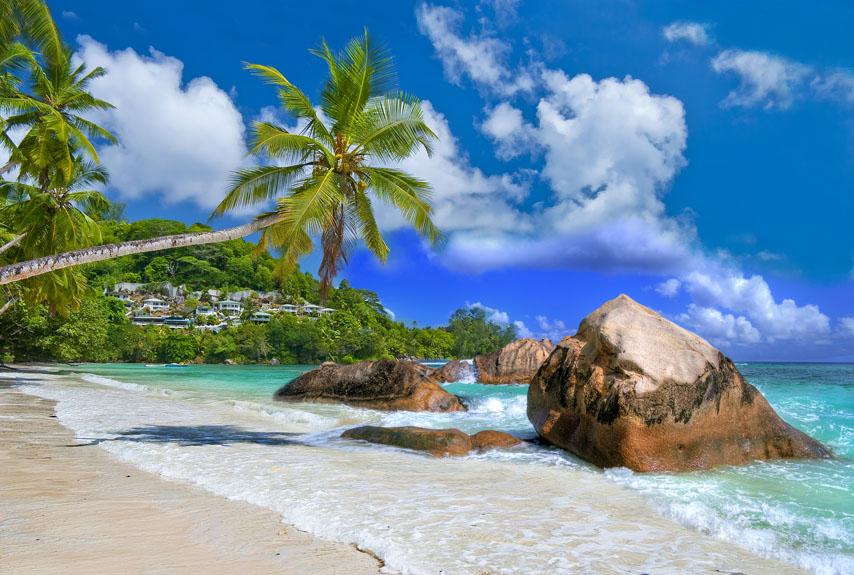 Фотошпалери море камені пальма пісок