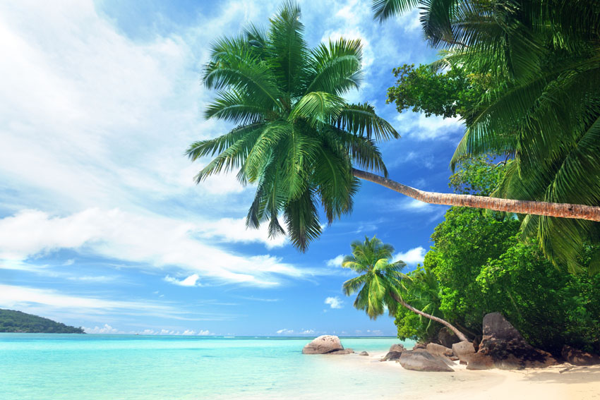 Фотошпалери море небо пальма острів