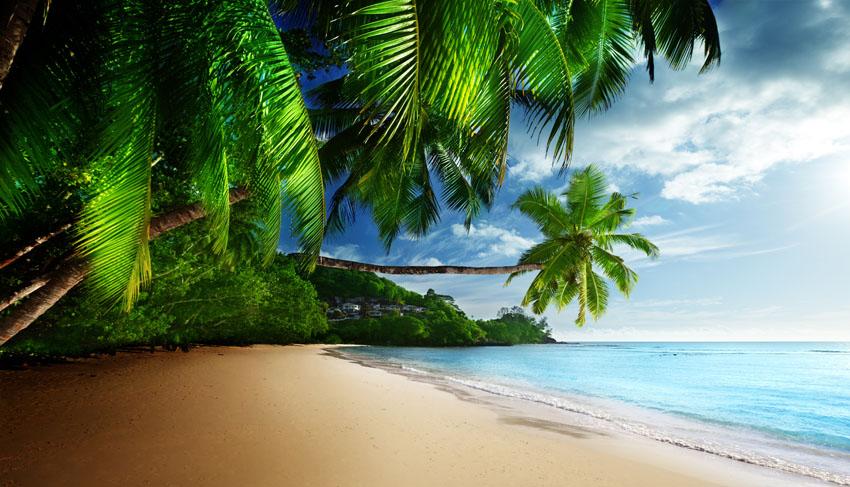 Фотообои море небо пальма песок