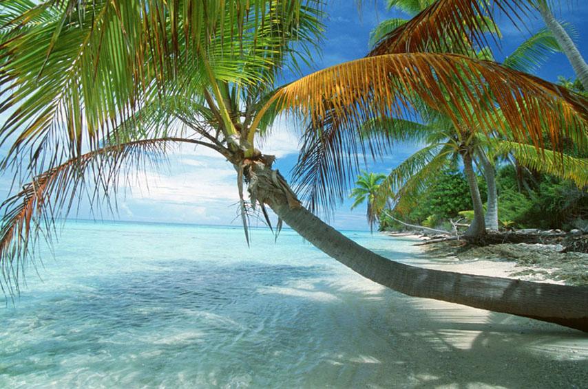 Фотообои море небо остров пальма