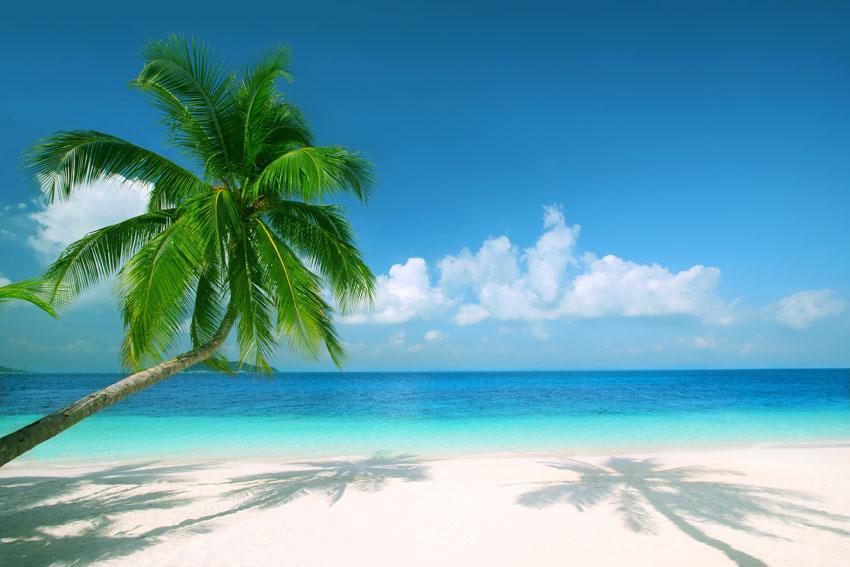 Фотообои море пляж пальмы песок