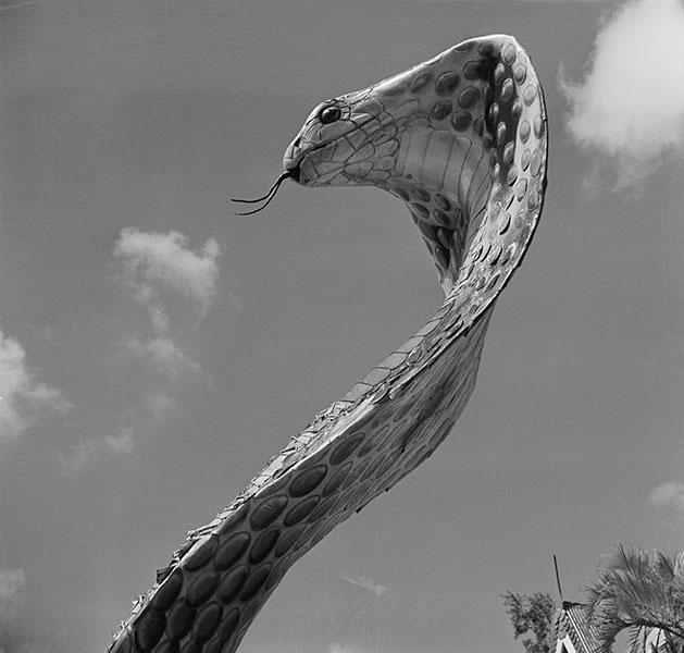 Фотошпалери чорно-білий фотографія фотографія фотошпалери